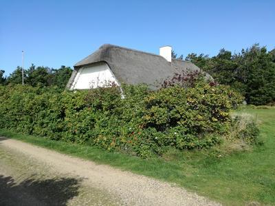 Sommerhus i Vedersø Klit - Ulfborg